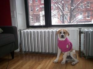 doggy sweaterB